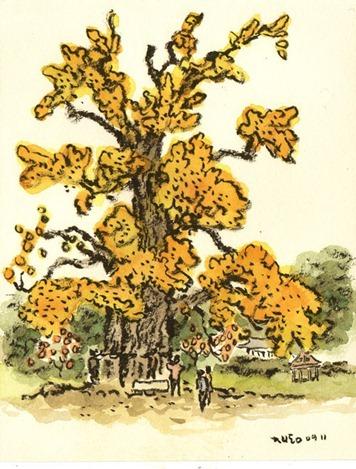 박재동,주암리 은행나무